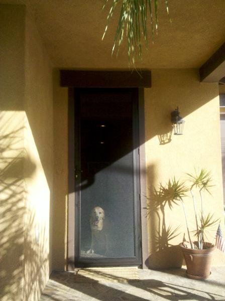 Bronze Tru-View Security Screen Door