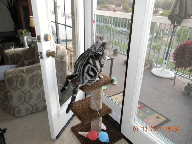 Willie n Nillie checking out the view through pet screen on White French Full View Swinging Screen Doors